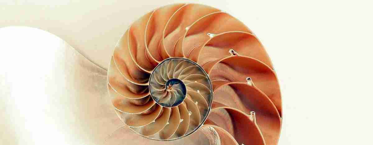 golden-ratio-nautilus-shell